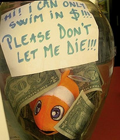 goldfish-tip